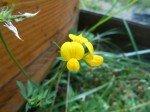 Fleur du jardin 3