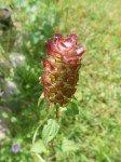 Fleur du jardin 4