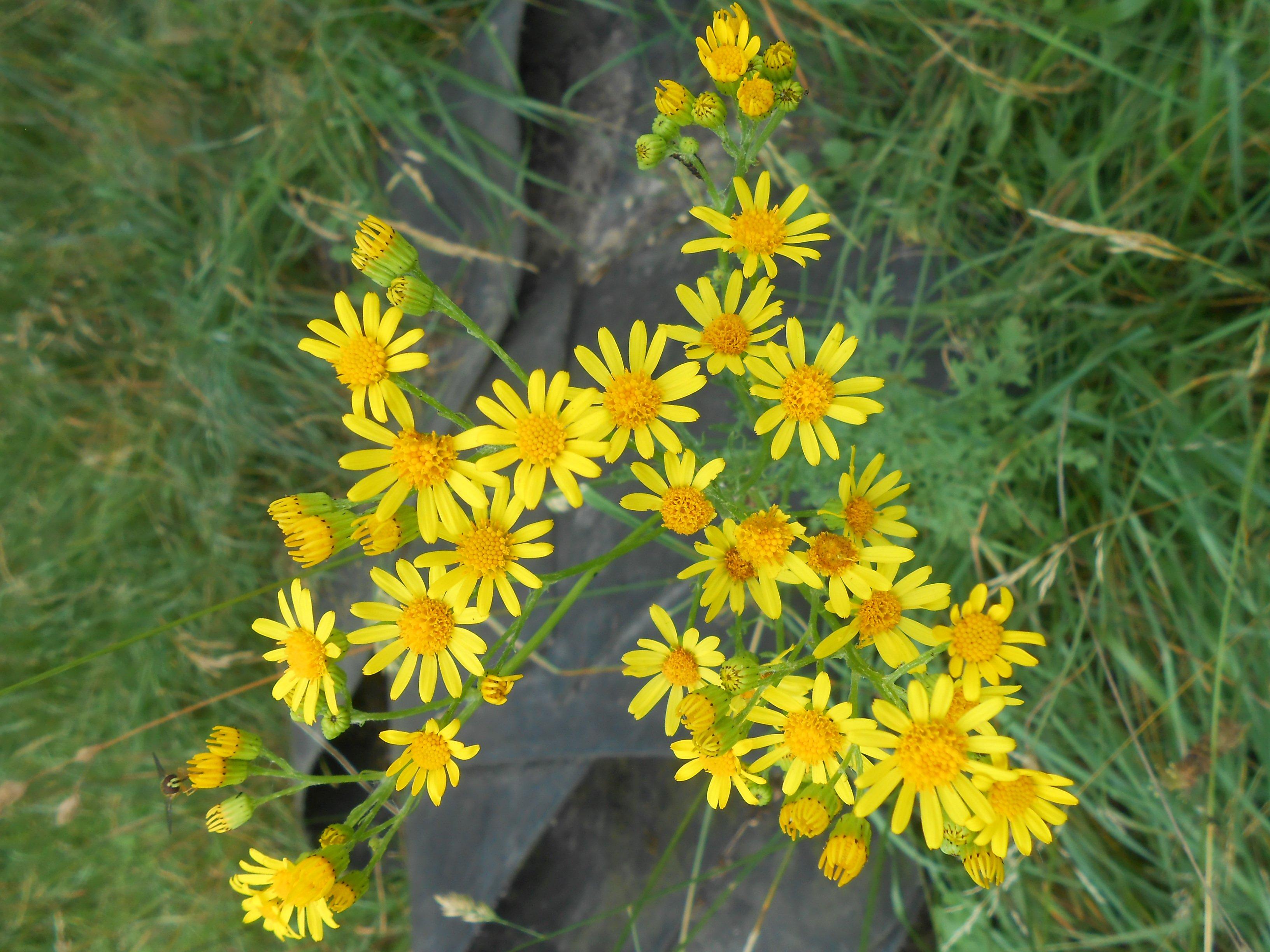 Juin un de mes mois pr f r s pour observer les fleurs du for Jardin soleil