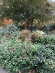 Jardin retrouvé -Honfleur - 11