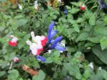 Jardin retrouvé -Honfleur - 12