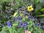 Jardin retrouvé -Honfleur - 13