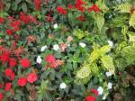 Jardin retrouvé -Honfleur - 6