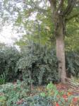 Jardin retrouvé -Honfleur - 8